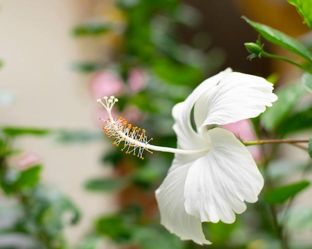 Schönheitskarpel der weißen blume