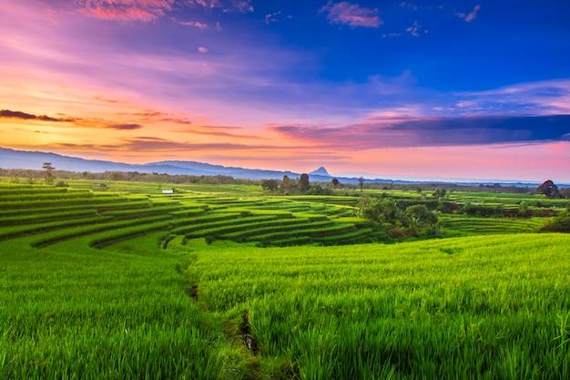Schönheitsmorgen mit erstaunlichem sonnenaufgang auf reisfeldern indonesien