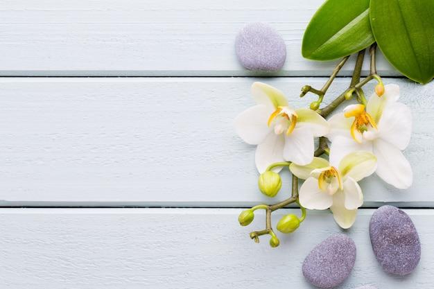 Schönheitsorchidee auf einem grau. spa-szene.