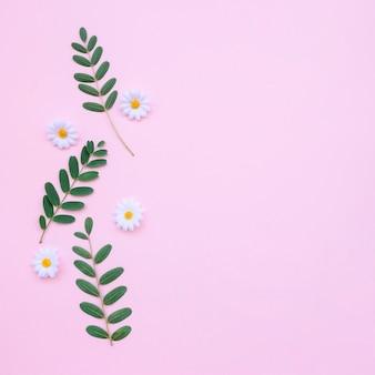Schöne Gänseblümchen und Blätter auf hellrosa Hintergrund