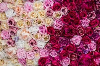 Schöne Hintergrundrosen für den Valentinstag