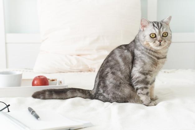 Schottische getigerte katze, die zu hause im bett liegt