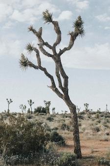 Schroffes gelände in der kalifornischen wüste