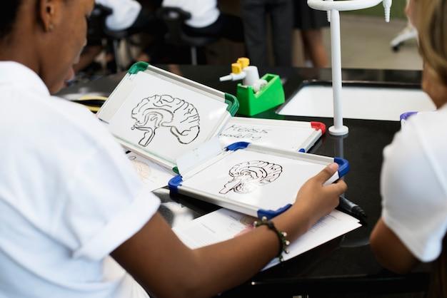 Schüler lernen biologieunterricht