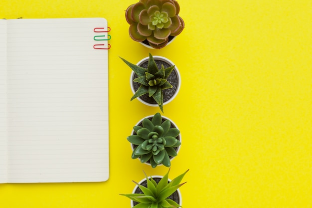 Schulbriefpapier mit kaktus