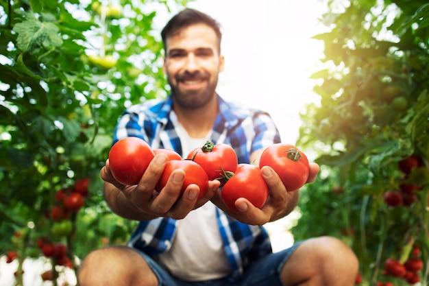 Schuss des lächelnden bauern, der tomaten in seiner hand hält, während er in der bio-lebensmittelfarm steht.