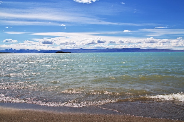 Schwan in laguna nimez reserva in el calafate patagonia, argentinien
