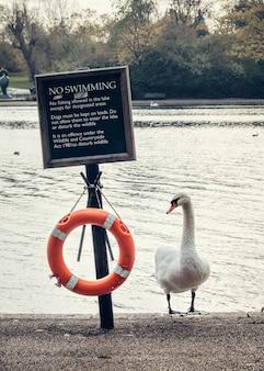 Schwan, rettungsring und teller kein schwimmen im hyde park, london