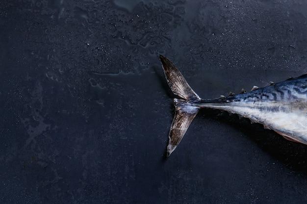 Schwanz von frischem thunfisch