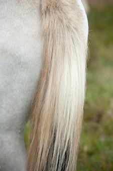 Schwanz von islandpferden in der weide