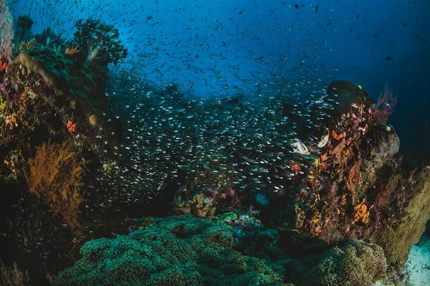 Schwarm von tropischen fischen in ihrem ökosystem