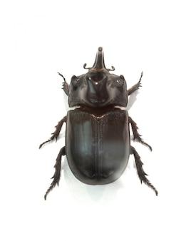 Schwarz breitkrempigen käfer