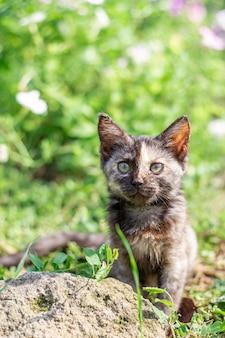 Schwarz geflecktes kätzchen im grünen gras süßes haustier