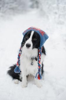 Schwarz-weiß-border-collie-hund im winter