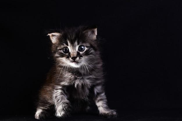 Schwarz-weiß-kätzchen