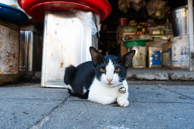 Schwarz-weiße katze mit einer glocke am kragen liegt auf dem boden in einem straßenmarkt