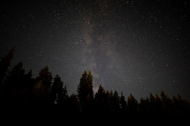Schwarze bäume in einer sternenklaren nacht des herbstes