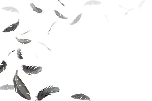 Schwarze federn schweben in der luft auf weißem hintergrund.