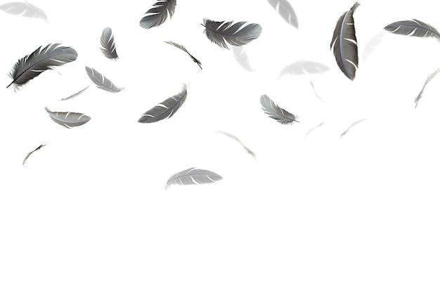 Schwarze federn schweben in der luft, isoliert auf weißem hintergrund.