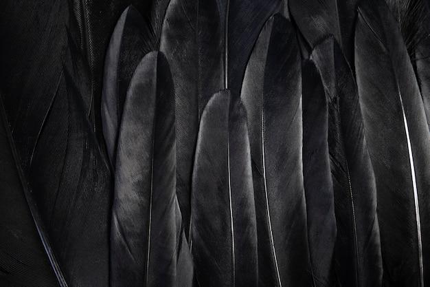 Schwarze flügelfedern abstrakter dunkler hintergrund