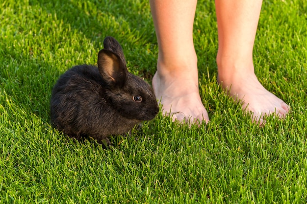 Schwarze kaninchen kleine schwarze süße kaninchen, die zusammen auf dem grünen gras sitzen, nahaufnahme kaninchen