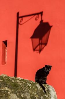 Schwarze katze auf der straße. der schatten der laterne, die rote wand