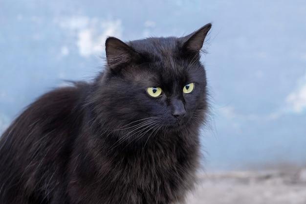 Schwarze katze auf einem hintergrund der hellblauen wand