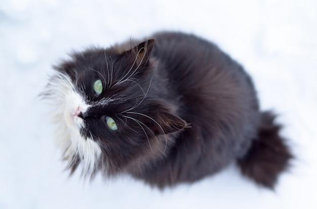 Schwarze katze auf weiß, im schnee sitzend und aufblickend