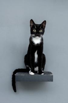 Schwarze katze der vorderansicht, die auf regal sitzt