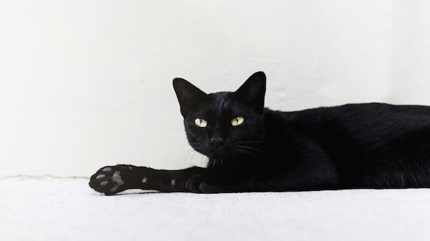 Schwarze katze, die auf den boden legt.