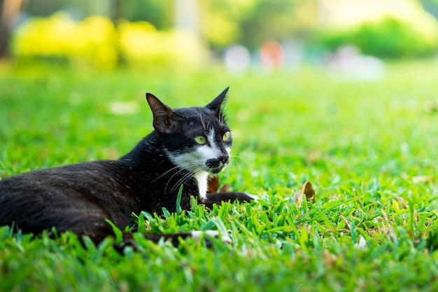 Schwarze katze, die auf der rasenfläche im park stillsteht
