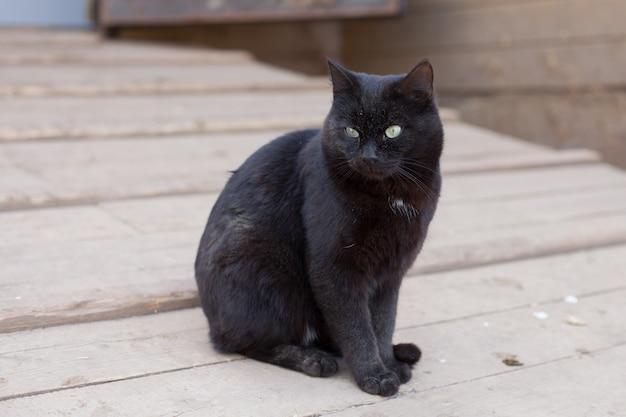 Schwarze katze, die auf der straße sitzt