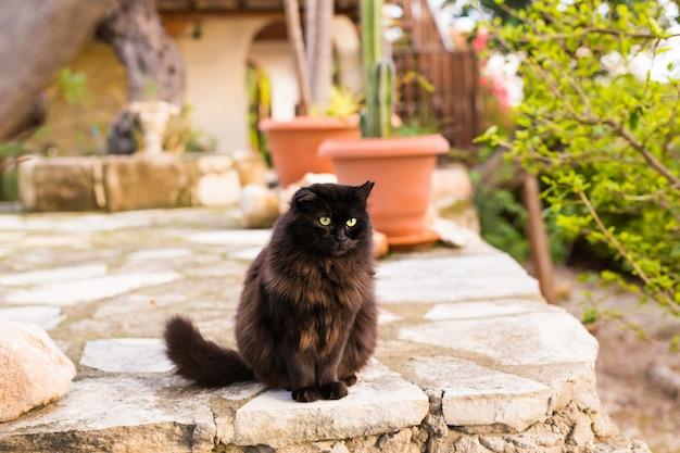 Schwarze katze, die draußen im straßencafé sitzt