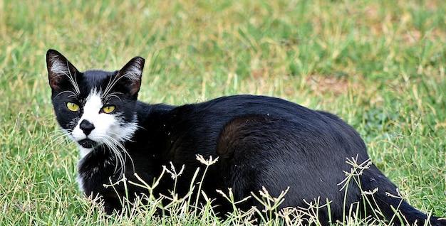 Schwarze katze, die in einem feld liegt, das im grün unter sonnenlicht bedeckt ist