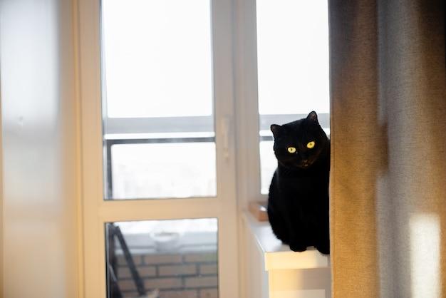Schwarze katze, die in einem gelben stuhl oben horizontale ansicht copyspace liegt