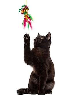 Schwarze katze, die vor einer weißen wand spielt