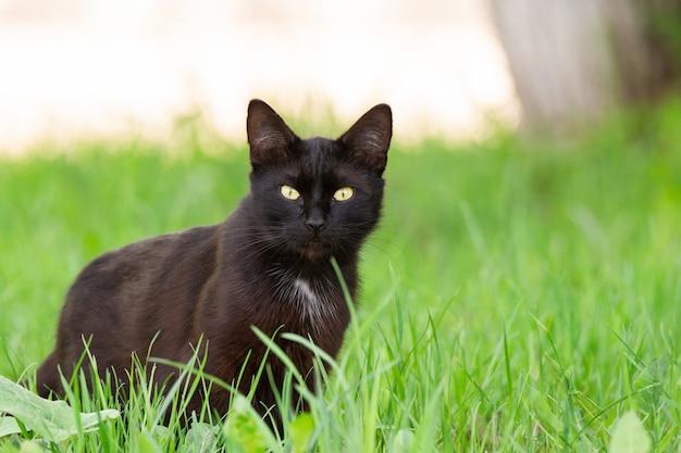 Schwarze katze im gras