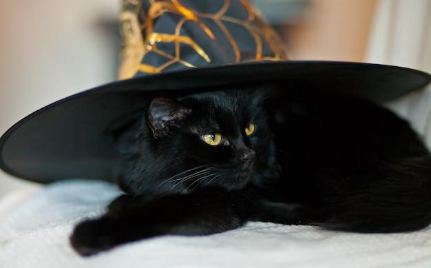 Schwarze katze in einem hexenhut für halloween