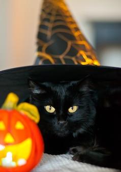 Schwarze katze in einem hexenhut mit kürbislaterne