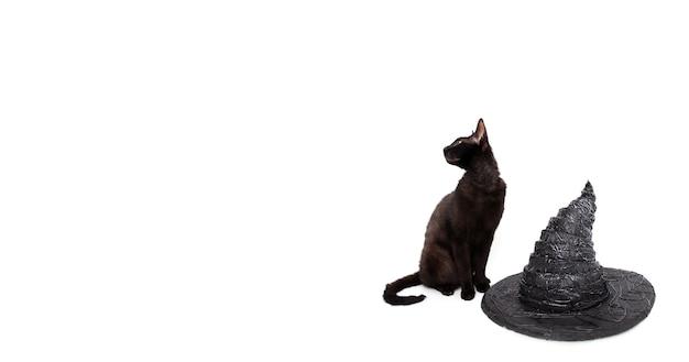 Schwarze katze mit hexenhut und kopienraum