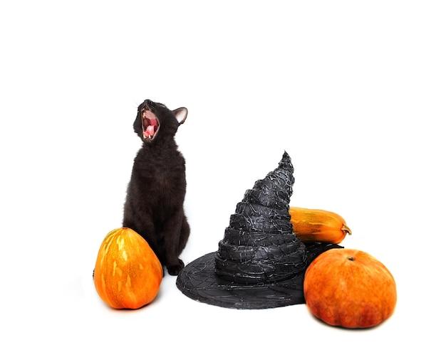 Schwarze katze mit hexenhut und kürbissen