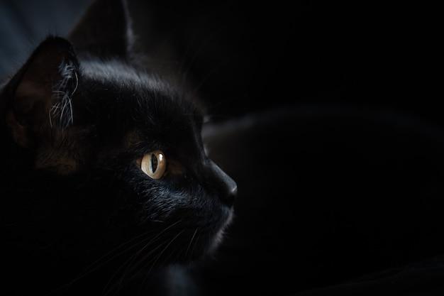 Schwarze katze mit leuchtenden augen vor schwarzem hintergrund