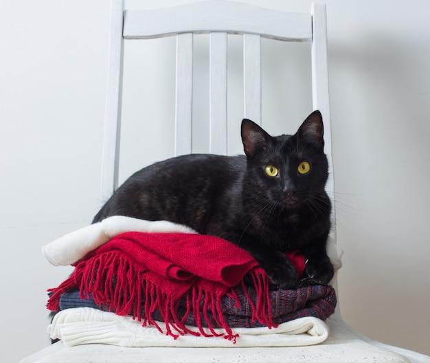 Schwarze katze mit winterkleidung auf einem stuhl