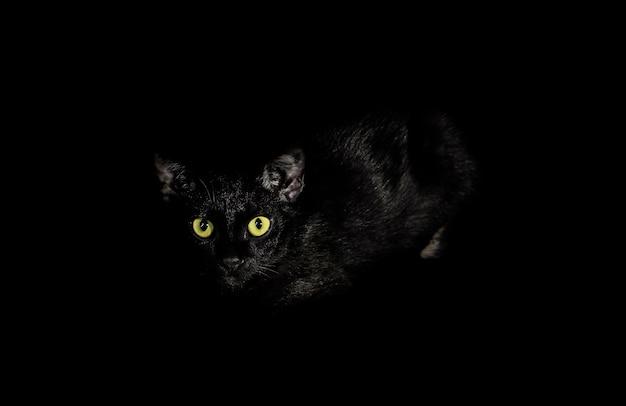 Schwarze katze, nahaufnahme der augen mit einer gelben farbe