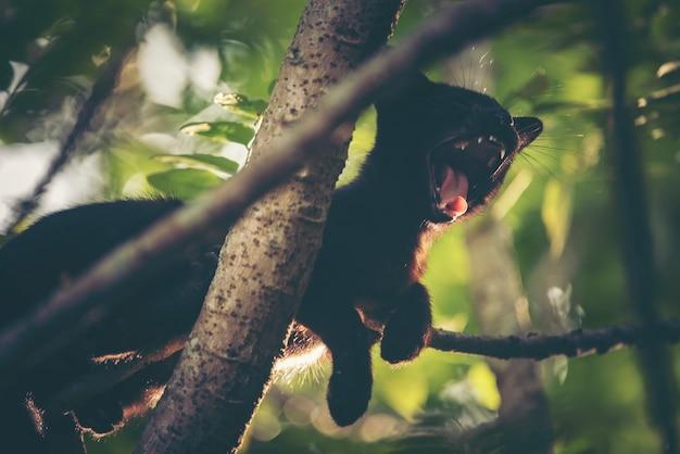 Schwarze katze schläfrig auf baum