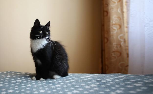 Schwarze katze sitzt auf dem bett im zimmer
