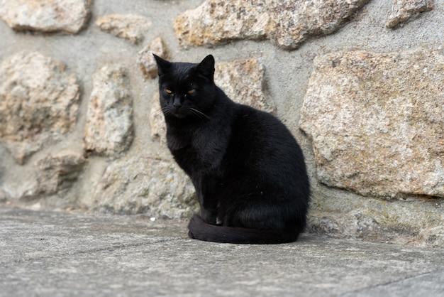 Schwarze katze sitzt auf dem kopfsteinpflaster