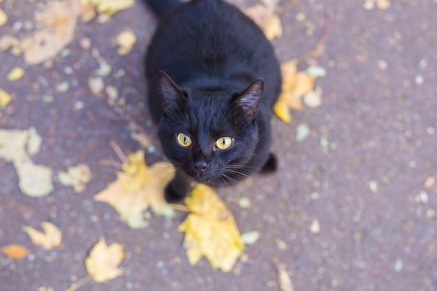 Schwarze katze sitzt auf den blättern