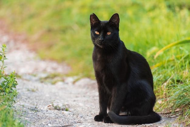 Schwarze katze sitzt auf einem weg zwischen gras