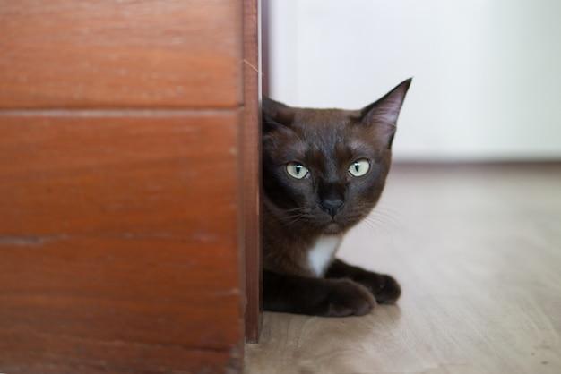Schwarze katze spielt suchen und verstecken hinter der holzwand mit neugierigem gesicht